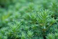 Green - ナナイロノート