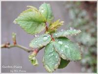 春の嵐 - Garden Diary