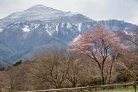秩父の春 - デジカメ写真集