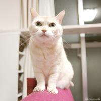 どったんばったん - 賃貸ネコ暮らし 賃貸住宅でネコを室内飼いする工夫