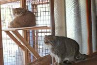 イーブニング・マヌル「レフ」&「シャル」~ペアリングの行方 - 続々・動物園ありマス。