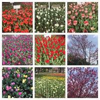 春便り~横浜編~ - 瑠璃色の庭