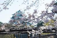 名古屋城の桜 〜名古屋なんて、だいすき〜 - YUKKESCRAP