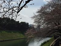 皇居ランといきなりステーキ(^^)v - ひなたぼっこ