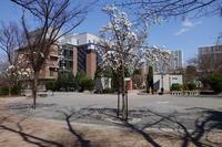 中央区をぶらぶら その4~日本橋浜町から日本橋横山町へ - 「趣味はウォーキングでは無い」