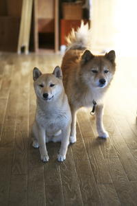 sakura&waku(4cut) 今日は平和に! -     ~風に乗って~    Present