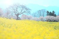 春の歌。 - *ぷるはあと*