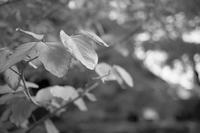 #228 Pastel Autumn やわらかな秋 - THIS MOMENT