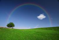 ゴルファーズアロマテラピー 4月の香り - パームツリー越しにgood morning        アロマであなたの今に寄り添うブログ