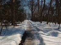 森の雪解け - 北緯44度の雑記帳