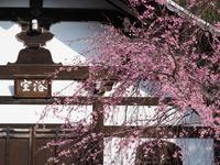 京都 桜 2017 - お寺や神社、古い町並み、鉄道、他色々の写真ブログ