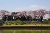 17.04.04 水元公園 de お花見散歩~♪♪ - 人生とは ?