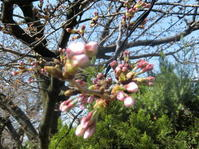 春ですね~~~~ - 人生楽しんだもの勝ち!