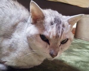 モン様パワーで「猫住まい専科」完成目指すです! - ご機嫌元氣猫の森公式ブログ