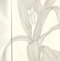 スケッチ「君子蘭」 - vogelhaus note