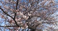 4月、花の季節になっていました! - 毛糸の花束~ニットブログ~