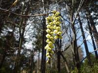 愛宕山の桜と有賀町の「かたくり」 - 自転車走行中(じてんしゃそうこうちゅう)