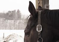 264鞍目 見えた!かも - 美味しい時間と馬と犬