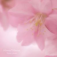 *ピンク* - HANA*HANA