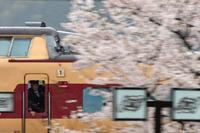 2年前の桜は - 今日も丹後鉄道