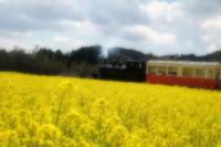 菜の花畑へご一緒に♪ - aya's photo