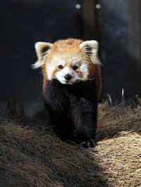 4月4日(火) 旅立ち - ほのぼの動物写真日記