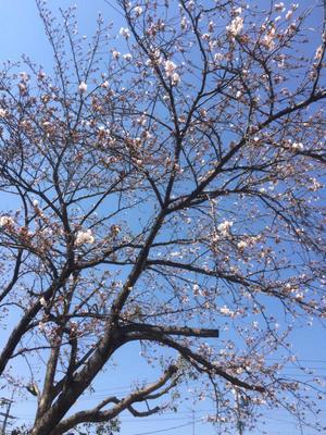 春が来た!!そして俺は動き出す - アラサー介護福祉士の日常
