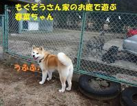 メゲずにバカンス中~(笑) - もももの部屋(家族を待っている保護犬たちと我家の愛犬のブログです)