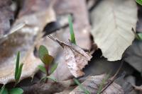 カタクリの花探し - 川の流れのカンツカブログ