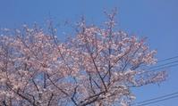 2017、櫻、咲く。-輿:近隣桜巡礼 - デハ712のデジカメ日記2017
