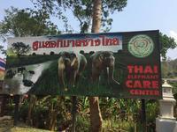 (行っていませんが・・・)タイ象ケアセンター 2017年3月 - ゾウさん