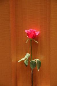 レ セゾン(帝国ホテル大阪)でフレンチのフルコースディナー - 司法書士 行政書士 柿本大治の青空さんぽ
