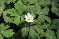spring ephemeral #3 - miyabine's フォト日記2~身の周りのきれい・可愛い・面白い~