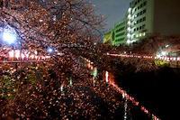 新年度と目黒の桜、愚痴など - マイニチ★コバッケン