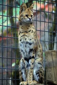 「タカ」と「ユキ」 - 動物園放浪記