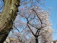 教育勅語はひとを殺す 木山捷平「尋三の春」&「1秒24コマの美」&「思想としての朝鮮籍」 - 梟通信~ホンの戯言