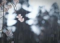 花の谷 - お留守ワンコ