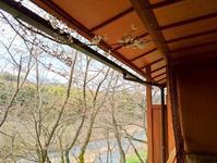 軒下で開花 - 金沢犀川温泉 川端の湯宿「滝亭」BLOG
