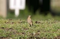 草原のアリスイ - 四季の予感