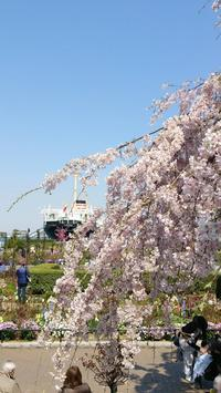 山下公園と中目黒の桜 X Residents - Sokurha 第29回音の貝合わせ - 鴎庵