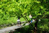 春休み - 長い木の橋
