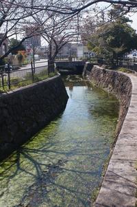 桜は出遅れてますが・・・春爛漫 - 岳の父ちゃん's PhotoBlog