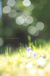 小さな春 - koharu*biyori