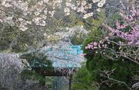 花の季節がやってきた - 写真でイスラーム