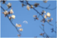 5分咲き - 写真画廊 ナカイノブカズ 2