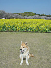 はなちゃんの4月4日 (*^_^*) - 犬連れへんろ*二人と一匹のはなし*