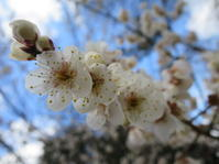花たち@仙台の春 - よく飲むオバチャン☆本日のメニュー