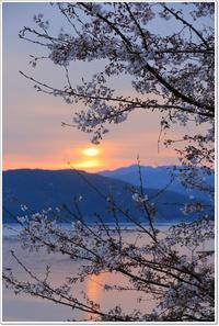 朝焼けと桜 - ハチミツの海を渡る風の音