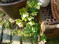控えめ - natural garden~       shueの庭いじりと日々の覚書き