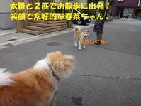 """証拠写真 (一一"""") - もももの部屋(家族を待っている保護犬たちと我家の愛犬のブログです)"""
